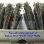 Cay-co-san-55cm-can-dai-04